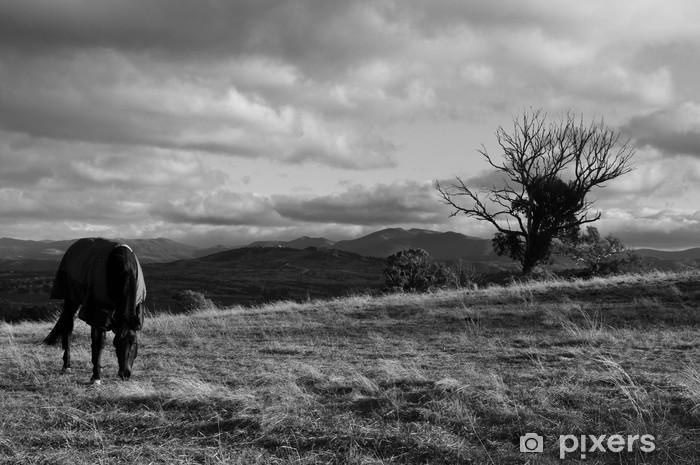Fototapeta winylowa Koń i drzewa - Krajobraz wiejski