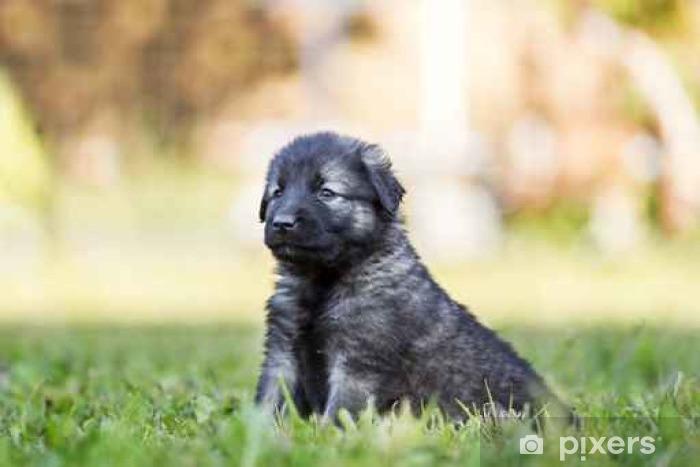 svart Puppy beste ibenholt fitte porno