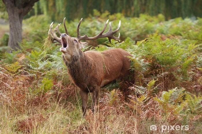 Vinyl Fotobehang Majestic Stag balkende Wild Red Deer - Thema's