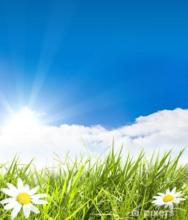 Fototapeta winylowa Zielone pole z kwiatów rumianku i Sunray - Pory roku