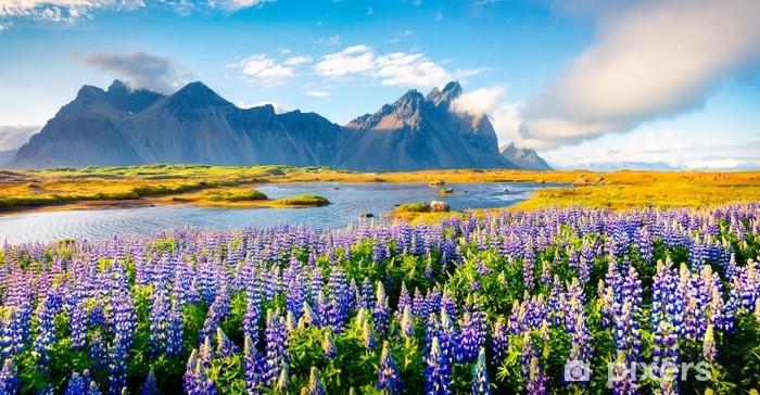 Fototapeta samoprzylepna Kwitnący łubin w Islandii - Krajobrazy