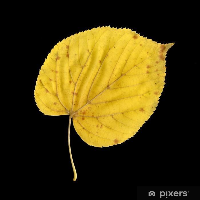 Vinyl-Fototapete Blattunterseite der Sommerlinde im Herbst - Jahreszeiten