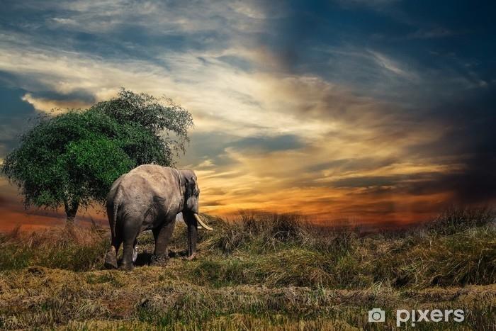 Papier peint vinyle Éléphant - Animaux