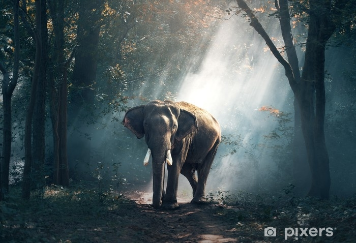 Fotomural Estándar Elefante - Animales