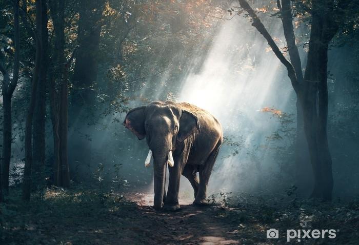 Fototapeta winylowa Słoń - Zwierzęta