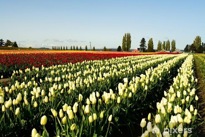 Vinylová fototapeta Pole tulipánů - Vinylová fototapeta