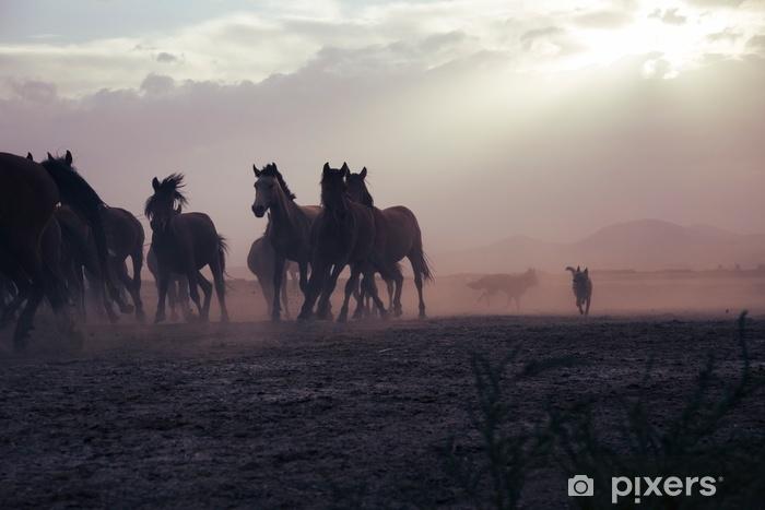 Fototapeta samoprzylepna Równina z pięknymi końmi w słoneczny letni dzień w Turcji. stado koni pełnej krwi. stado koni biegnie szybko w pustynnym kurzu przed dramatyczne niebo zachód słońca. dzikie konie - Zwierzęta