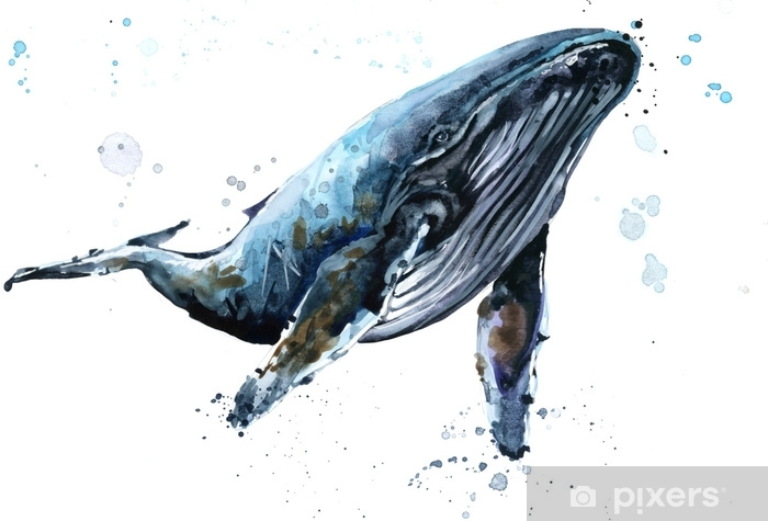 Papier Peint Baleine Illustration Aquarelle De Baleine A Bosse