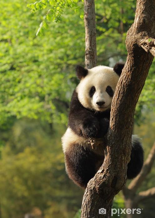 Fototapeta winylowa Cute młoda panda siedzi na drzewie pl twarzy - Tematy