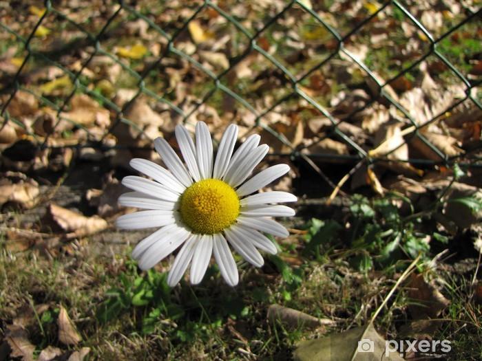 Papier peint vinyle Effeuiller la Marguerite - Fleurs