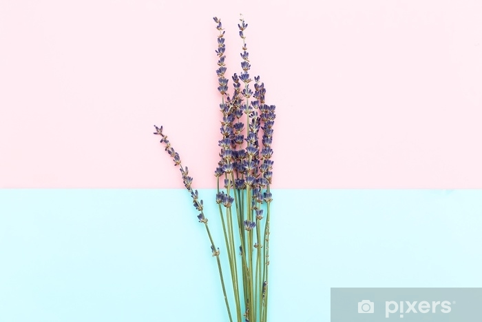 Pixerstick-klistremerke Kvister av lavendel på en rosa-blå bakgrunn. minimalisme - Grafiske Ressurser