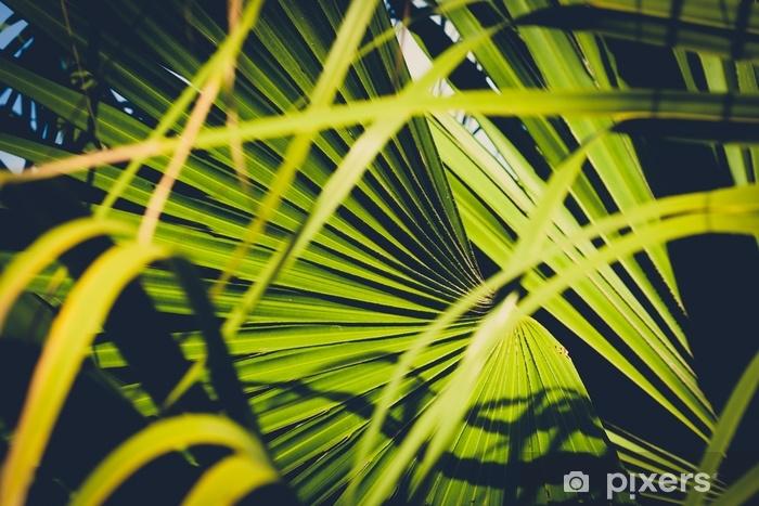 Naklejka Pixerstick Zbliżenie liści palmowych, wewnątrz tropikalnego ogrodu - roślina tło - Rośliny i kwiaty