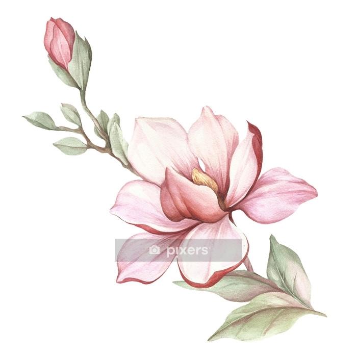 Naklejka na ścianę Obraz kwitnących gałęzi magnolii. akwarela ilustracja - Rośliny i kwiaty