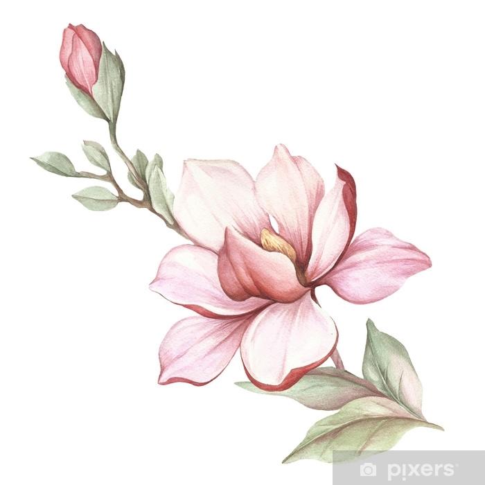 Sticker Pixerstick Image de la branche de magnolia en fleurs. illustration aquarelle - Plantes et fleurs