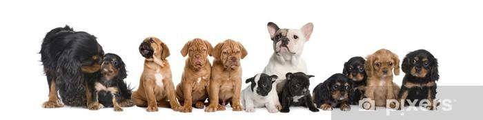 Vinyl Fotobehang Groep van honden zitten voor witte achtergrond, studio-opname - Zoogdieren