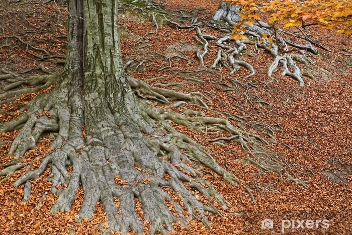 Nálepka Pixerstick Kořeny stromu v podzimních barvách - Roční období