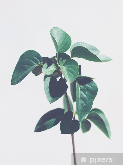 Naklejka Pixerstick Zielone liście roślin na białym tle na jasnoszarym tle. fajne tony. skopiuj miejsce - Rośliny i kwiaty
