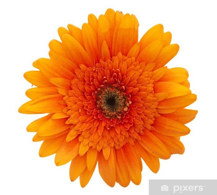 Naklejka Pixerstick Pomarańczowy kwiat stokrotka - Święta międzynarodowe