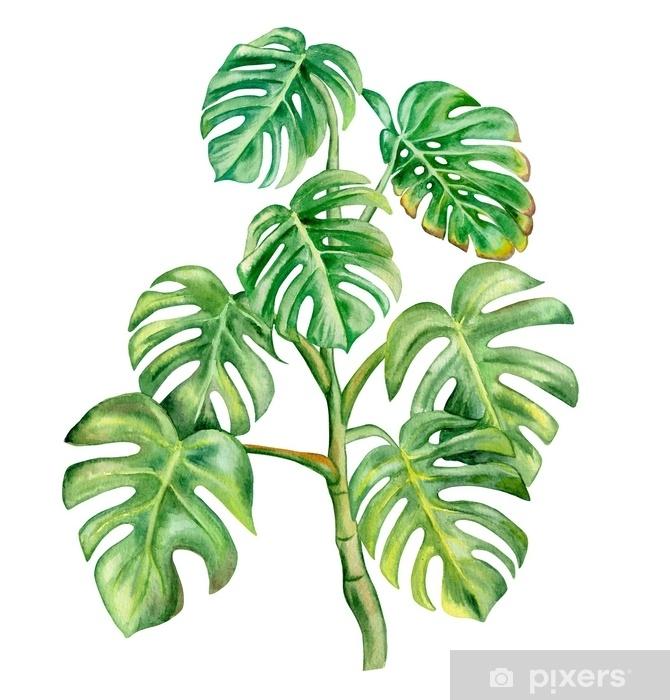 Naklejka na biurko i stół Zielony liść monstera na białym tle. ręcznie malowane akwarela ilustracji. realistyczna sztuka botaniczna. szablon - Rośliny i kwiaty