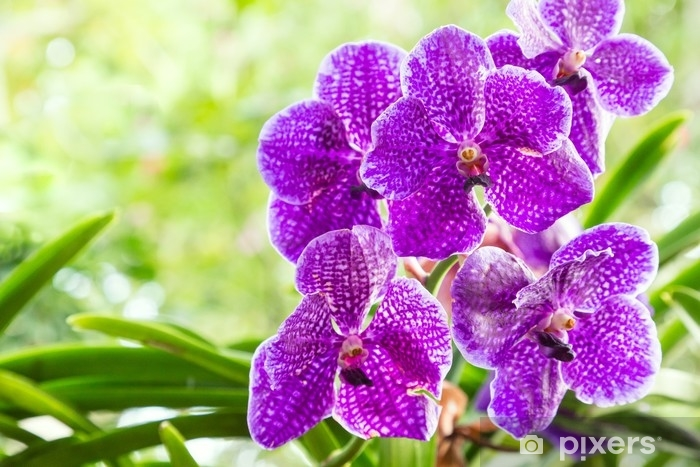 Orchid Flower In Orchid Garden At Winter Or Spring Day For Postcard
