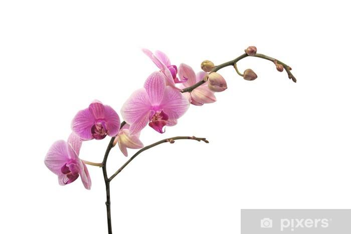 Papier peint vinyle Branche orchidée - Fleurs