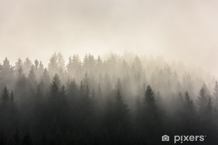 Vinyl Fotobehang Dennenbossen. mistige ochtendmening in nat berggebied. - Landschappen