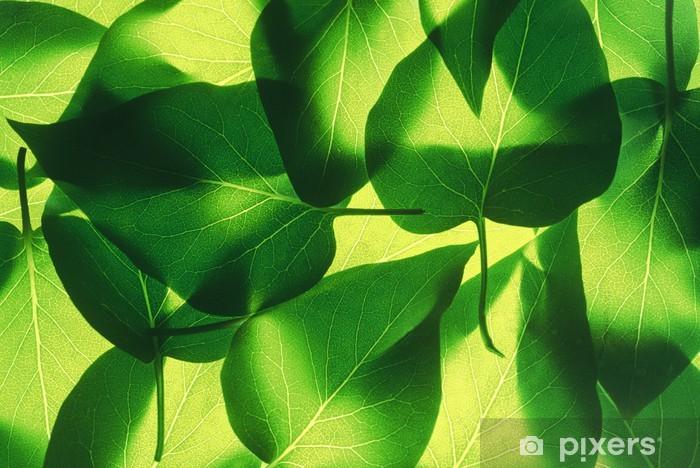 Naklejka Pixerstick Fluorescencyjny arkusz - Cuda natury