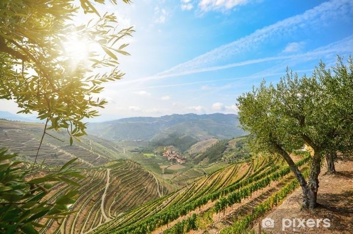 Fototapeta samoprzylepna Winnice i drzewa oliwne w dolinie Douro w pobliżu lamego, portugal europa - Przemysł