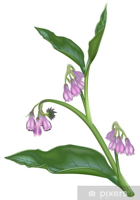 Fototapeta winylowa Żywokost lekarski (Symphytum officinale) - Rośliny