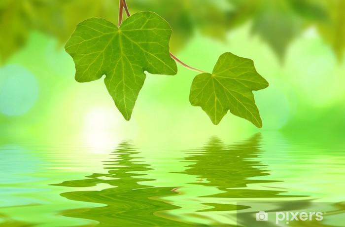Fototapeta samoprzylepna Zielone liście na wiosnę - Tematy