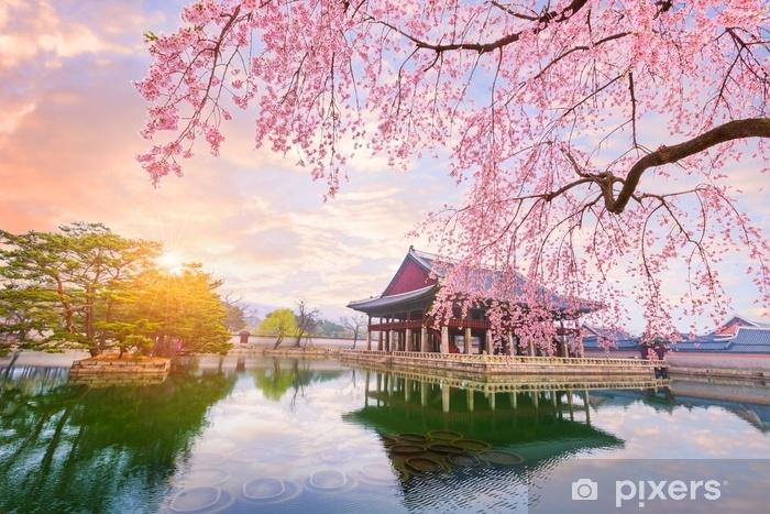 Fototapeta zmywalna Gyeongbokgung pałac z drzewa wiśni w czasie wiosny w Seulu miasto korea, korea południowa. - Podróże