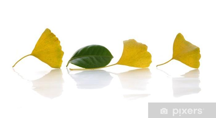 Vinyl-Fototapete Drei gelbe Ginkgo-Blätter und ein grünes Blatt - Pflanzen