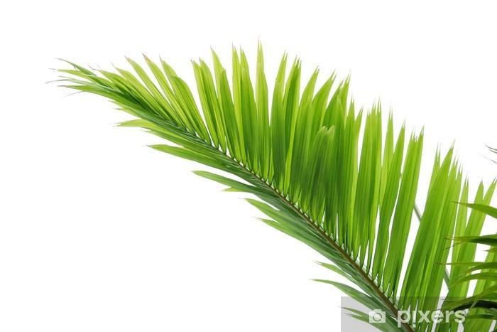 sticker feuille de palmier sur fond blanc � pixers174 nous