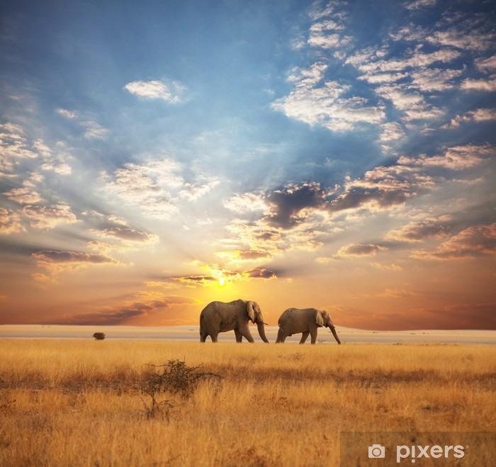 Papier peint vinyle Éléphant - Thèmes