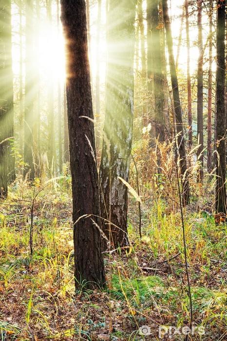 Vinyl-Fototapete Sonnenuntergang - Wälder