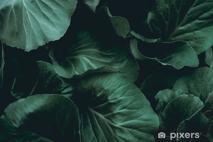 Pixerstick Aufkleber Pflanze hintergrund - Grafische Elemente