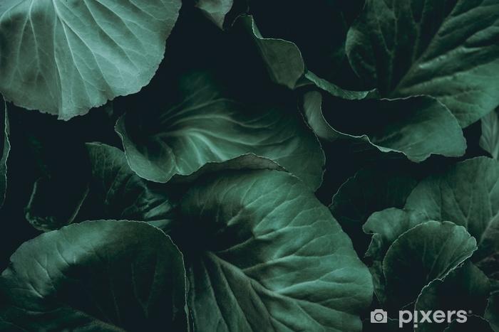 Kasvit taustalla Vinyyli valokuvatapetti - Graafiset Resurssit