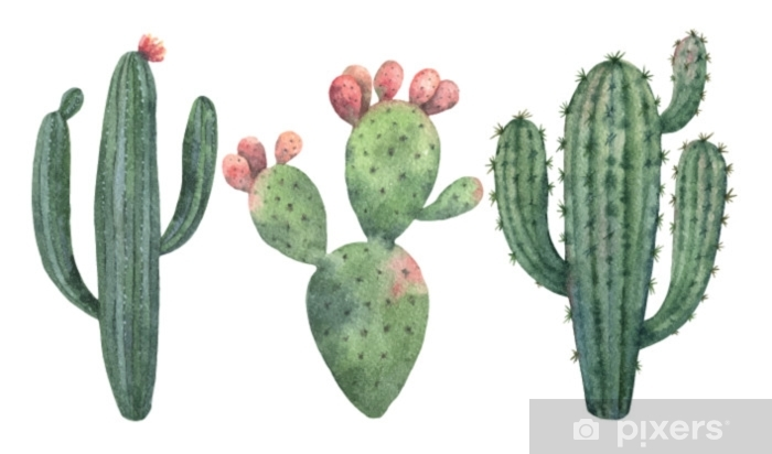 Watercolor vector set of cacti and succulent plants isolated on white background. Pixerstick Sticker - Plants and Flowers