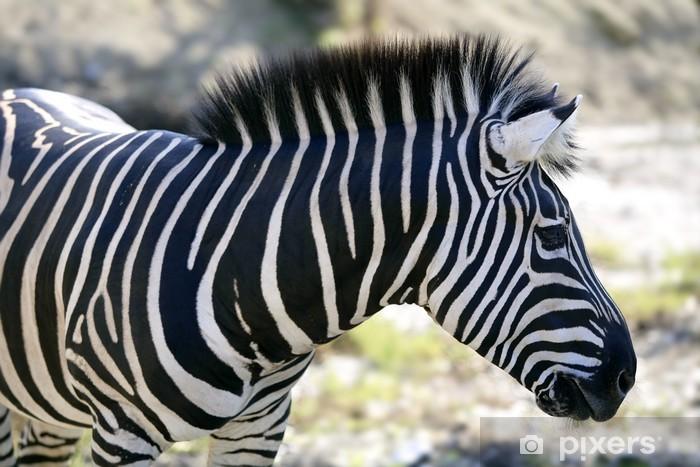Vinyl-Fototapete Schöne afrikanische Zebra Freien - Themen