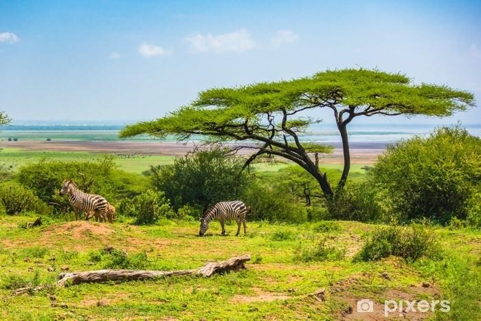 Fototapeta winylowa Dzika zebra w obszarze ochrony krateru ngorongro. Tanzania. - Krajobrazy