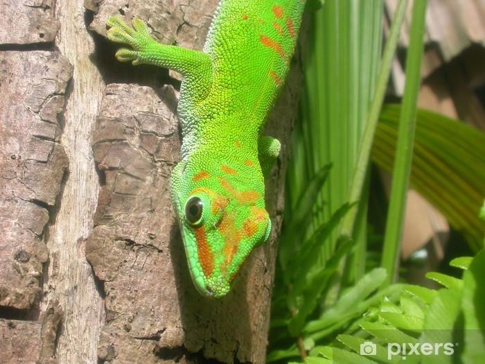 Papier peint vinyle Gecko halbportrait @ Maurice - Thèmes