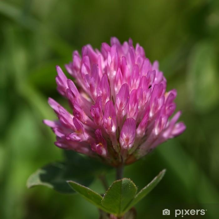 Sticker Pixerstick Rotklee (Trifolium pratense) - Plantes