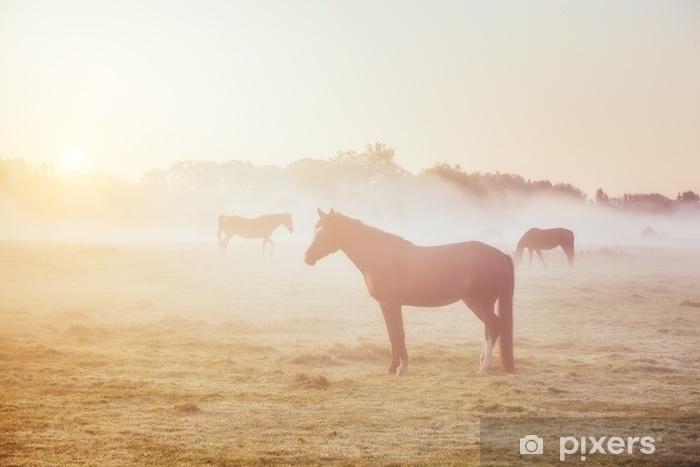 Fototapeta winylowa Widok pastwiska z wypasu koni arabskich w słońcu. świat piękna. miękki filtr. ciepły efekt tonizujący. - Zwierzęta