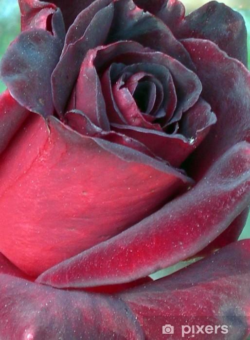 Fotomural Estándar Negro - Flores
