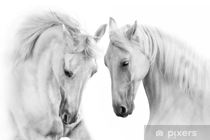 Zelfklevend Fotobehang Paar van wit paard op witte achtergrond - Dieren