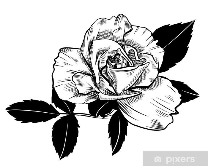 Nálepka Pixerstick Rose kreslení - Květiny