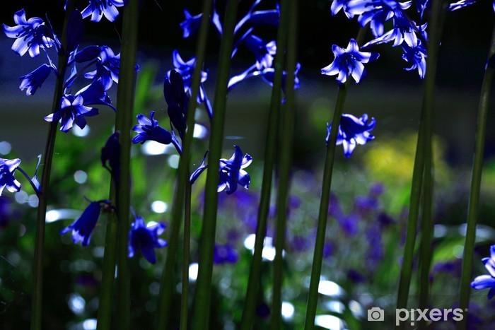 Vinyl-Fototapete Sonnenbeschienenen Glockenblumen - Blumen