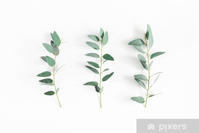 wall murals eucalyptus leaves on white background pattern made of eucalyptus branches flat lay top view.jpg