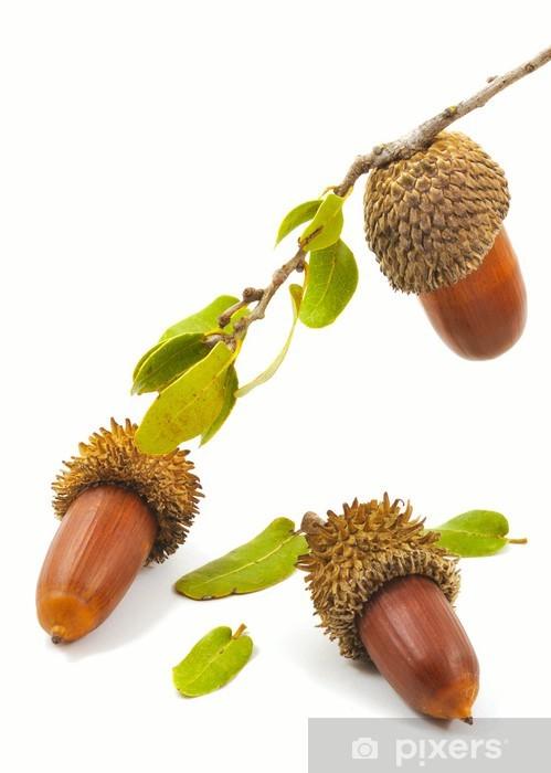 Three acorns Pixerstick Sticker - Wonders of Nature