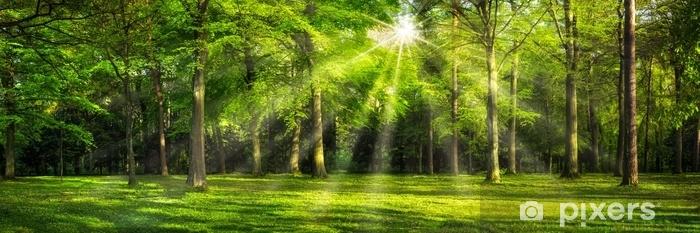 Afwasbaar Fotobehang Grünes wald panorama im sonnenlicht - Landschappen